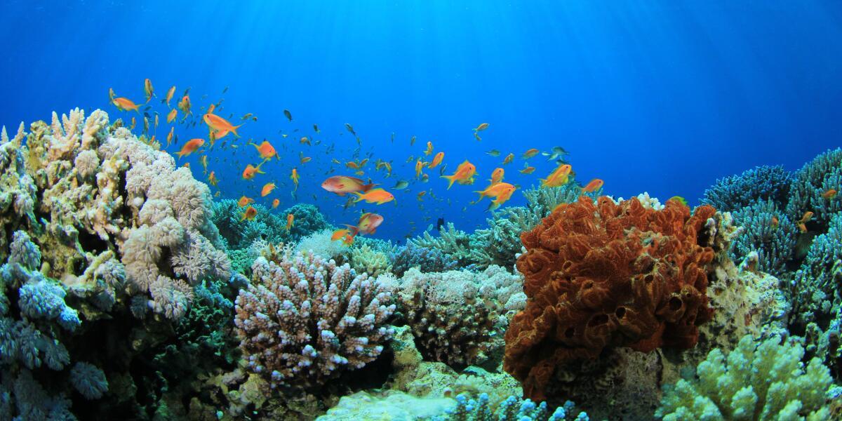 av_preservation-marine-pilier_brand-website_the-brand_ratio-4-3