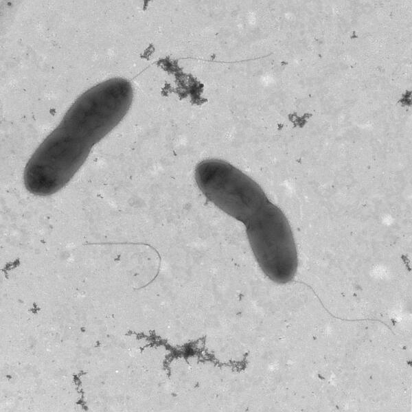 av_aquadolomiae_microscope_website